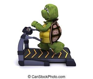 tortoise running on a treadmill