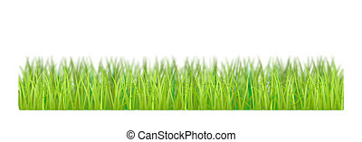The grass is on a white background.