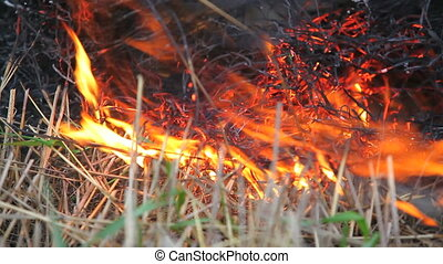 burning - dry straw burning. Close up