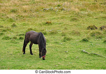 Horse on grassy field - Black horse grazing on grassy field