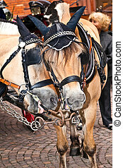 head of stagecoach horses in detail - head of stagecoach...