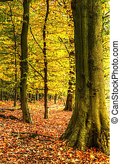 Stunning colorful vibrant Autumn Fall forest landscape