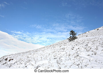 Lonely fir-tree on a snow slope against the blue sky