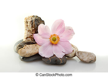Anemone flower and pebbles