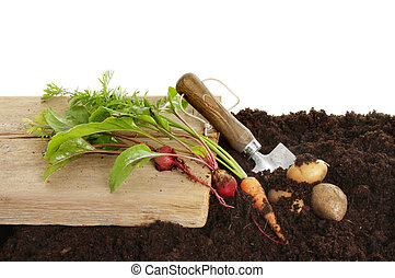 Root vegetables - Freshly dug root vegetables in soil with a...