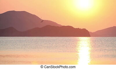 Flying seagull in the sea at sunrise