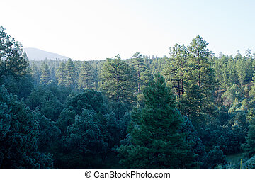 Morning Mist Trees Sangre de Cristo Mountains NM - Morning...