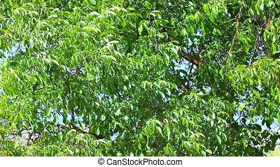 Wind on the tree