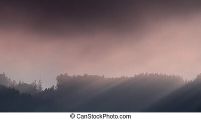 fog and sun - sunbeams at fogy forest timelapsed