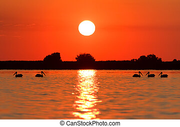 sunrise in the Danube Delta - a beautiful sunrise in the...