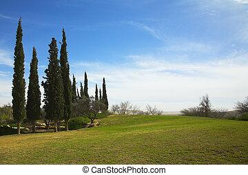 Oasis - Cypress avenue in an oasis in desert near the Dead...