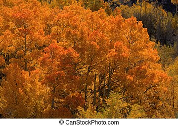 Fall color in the aspens