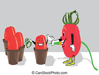 tomatoes -   tomatoes