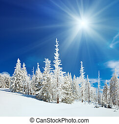 Snowy landscape - Winter snow covered fir trees on...