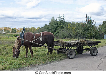 Drawn horse  - Drawn by a horse in the countryside