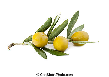 fresh olives on the olive branch isolated on white...