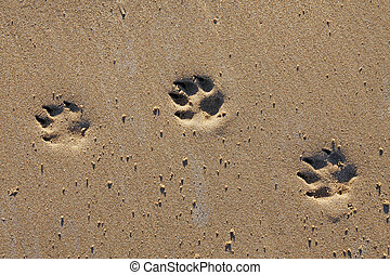Animal footprints in sand - Animal footprints in the sand,...