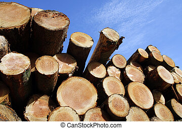 Stockpile of logging timber showing annual rings