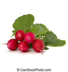Small garden radish - Small garden radish isolated on white...