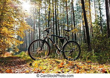bike - color bike in sunny day, bike series,