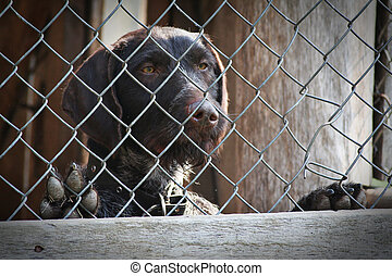 dog - brown dog locked in a cage
