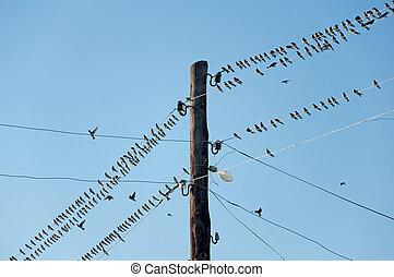 joven, golondrinas, alambres, contra, azul, cielo