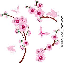 elementos,  sakura