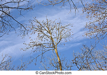 crown of trees with blue sky