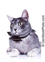 closeup picture of a cute cat