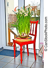 daffodil in vase on red chair in kitchen