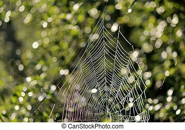 Cobweb - A Cobweb in the morning dew in front of green...