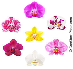 Orchids - Detailed set of 7 various phalaenopsis orchid...