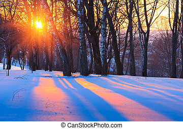 Sunset in winter park - Colorful sunset in winter park