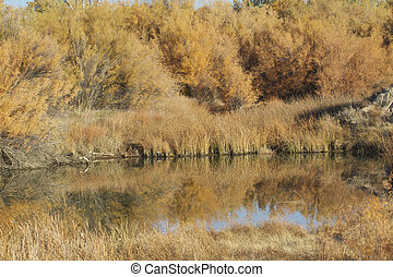 Pond Reflection in fall