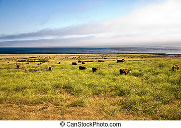 cows graze fresh grass on a meadow in Andrew Molina State...