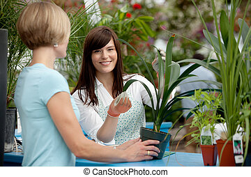 Worker and Customer in Greenhouse - Worker helping customer...
