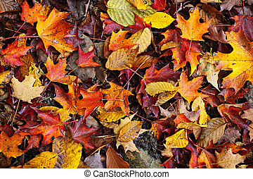 Fall leaves background - Background of colorful autumn...