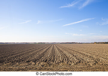 Dutch agriculture landscape with blue sky