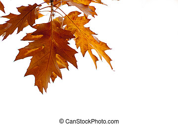 fall leaves as autumn background
