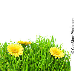 Isolated green grass with yellow flowers