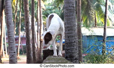 meeting with a dog in India