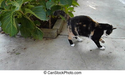 cat playing with a mouse - cat hunted a mouse and play with...