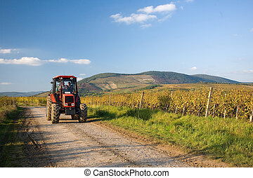 The end of harvest at the vineyards. - Late fall, harvest...