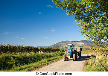 The end of harvest at the vineyards - Late fall, harvest...