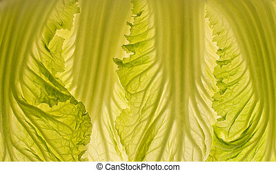 Beautiful cabbage leaf macro lit-thru. - Beautiful cabbage...