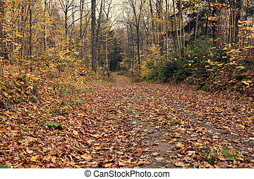 Fall in Wisconsin. Road in the forest - Green Bay area.