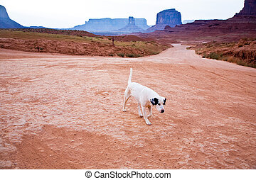 Monument Valley in Arizona, lonely dog  walks along the sandy way