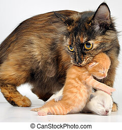 motherhood - Mother cat with newborn kitten in her mouth....