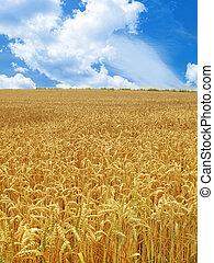 grain field under beautiful sky