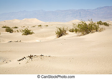 dried desert gras in Mesquite Flats Sand Dunes in the...
